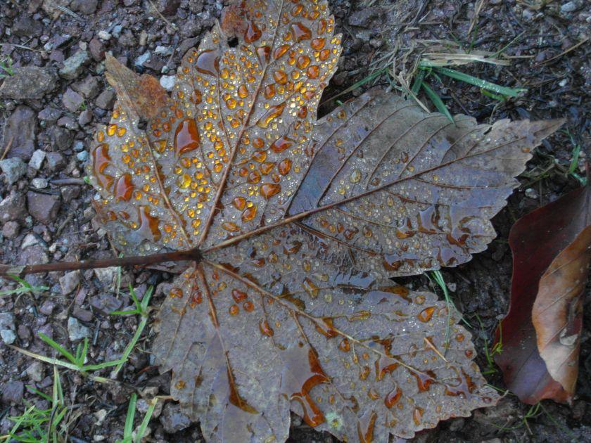 HerbstGoldlauter0001