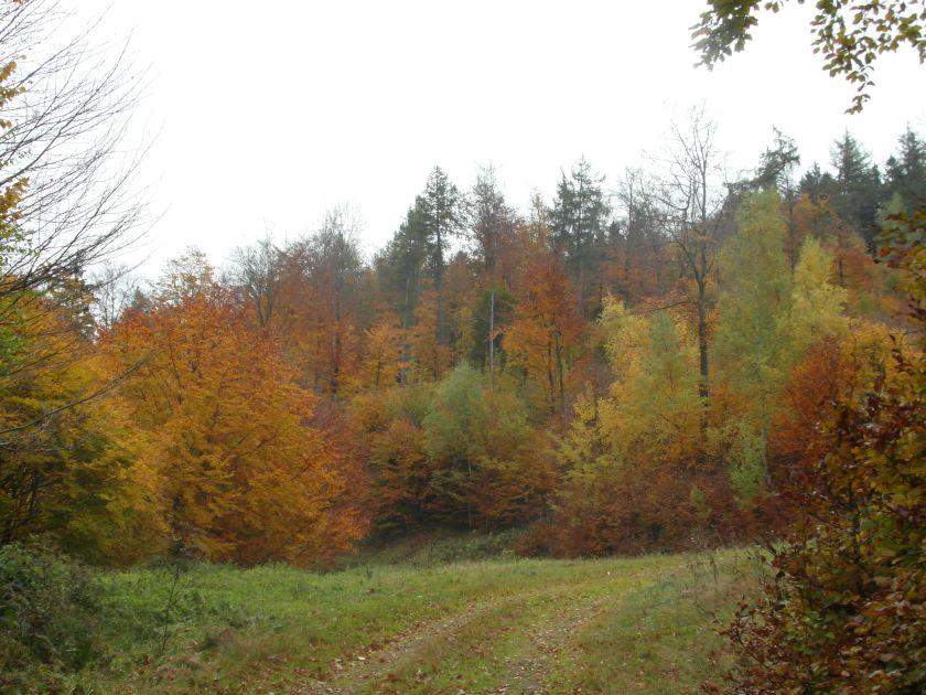 HerbstGoldlauter0004