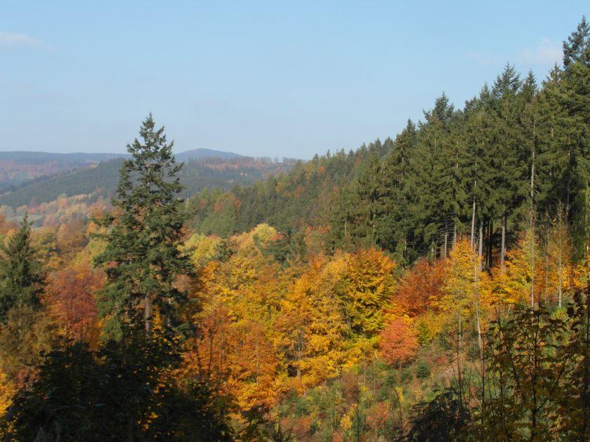 HerbstGoldlauter0007
