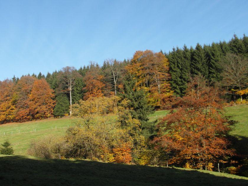 HerbstGoldlauter0009