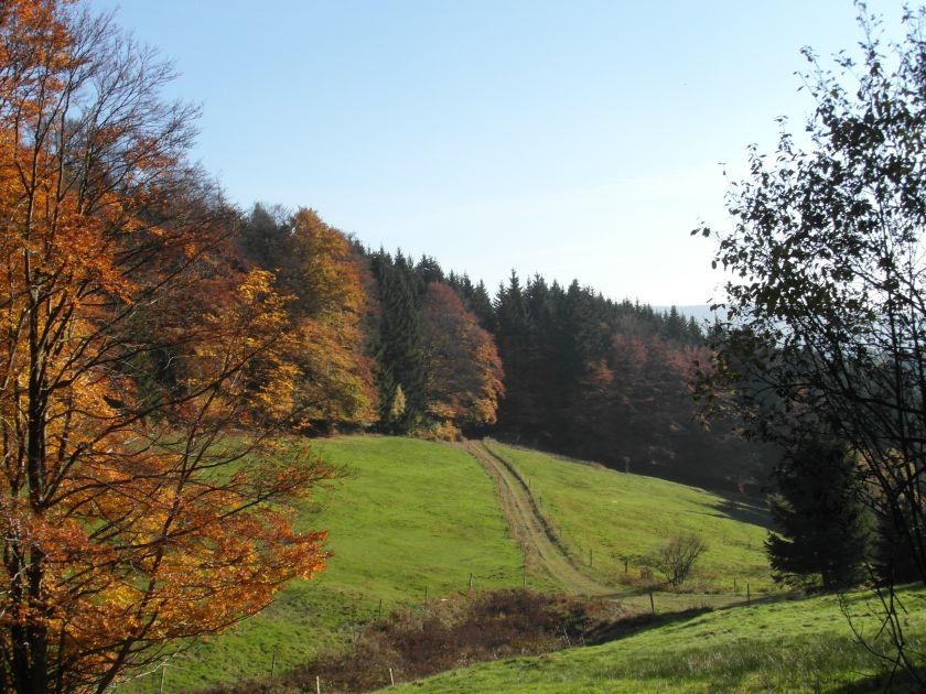 HerbstGoldlauter0010