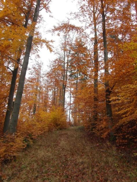 HerbstGoldlauter0013