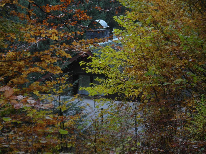 HerbstGoldlauter0014