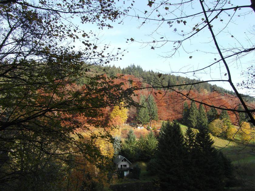 HerbstGoldlauter0018
