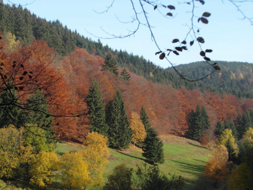 HerbstGoldlauter0020