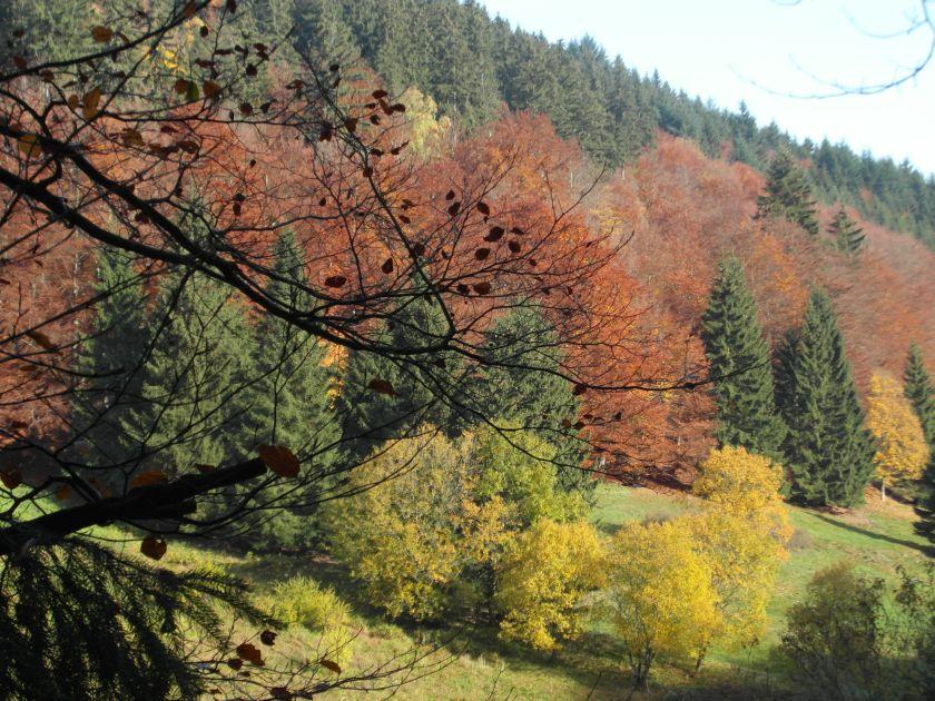 HerbstGoldlauter0021