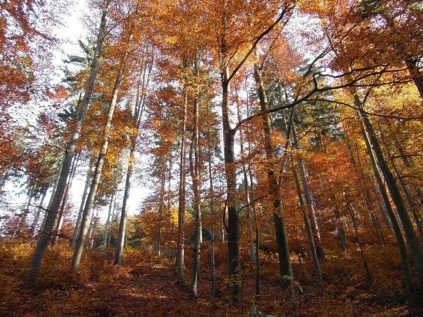 HerbstGoldlauter0024