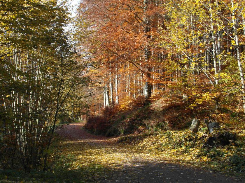 HerbstGoldlauter0025