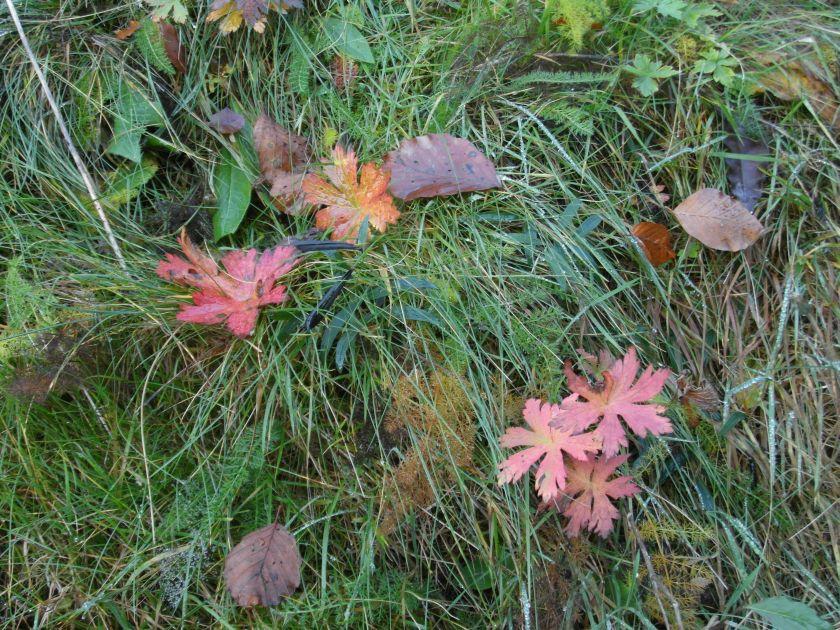 HerbstGoldlauter0026